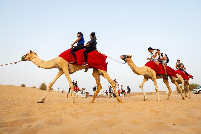 Dubai Combo:City Sightseeing Tour and Premium Desert Safari with all Activities