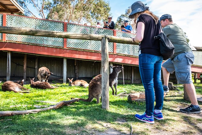 Phillip Island Tour from Melbourne