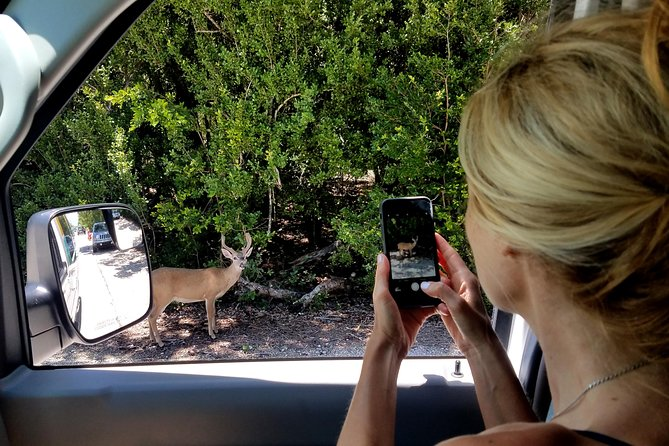 Private Tour of Florida Keys from Key West: 7-Mile Bridge, Beach, and Key Deer
