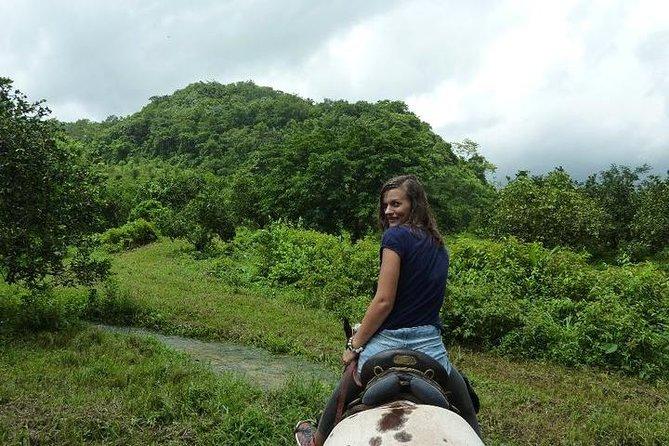 Jungle Horseback Adventure