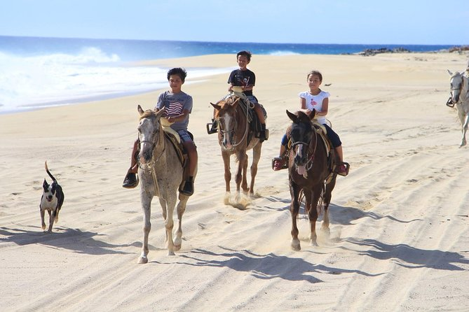 Los Cabos Horseback Riding photo 3