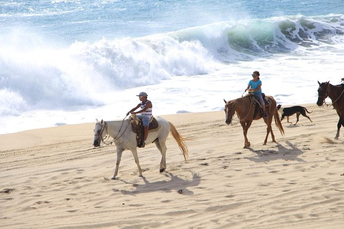 Los Cabos Horseback Riding photo 12