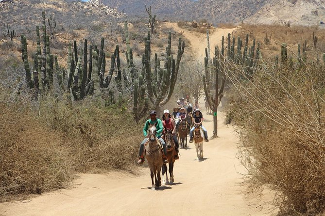 Los Cabos Horseback Riding photo 11