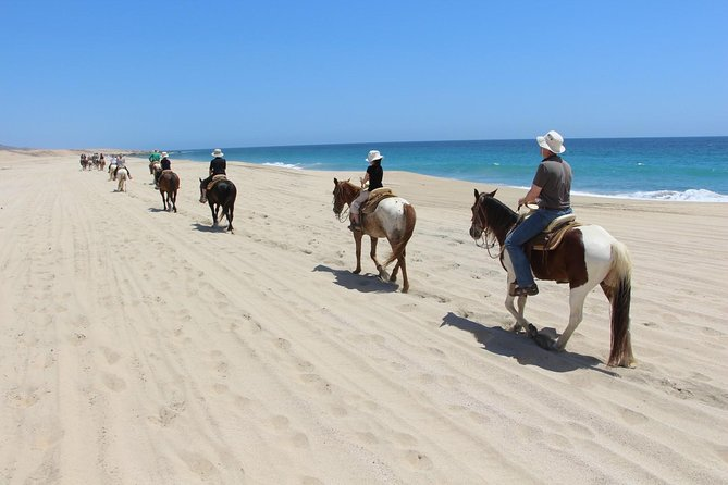 Los Cabos Horseback Riding photo 6