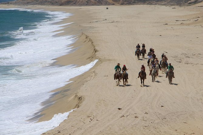 Los Cabos Horseback Riding photo 8