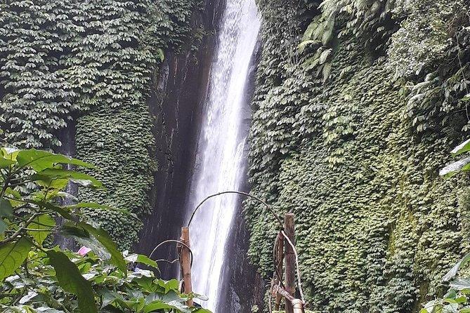 Bali DAY TRIP TO NORTH BALI