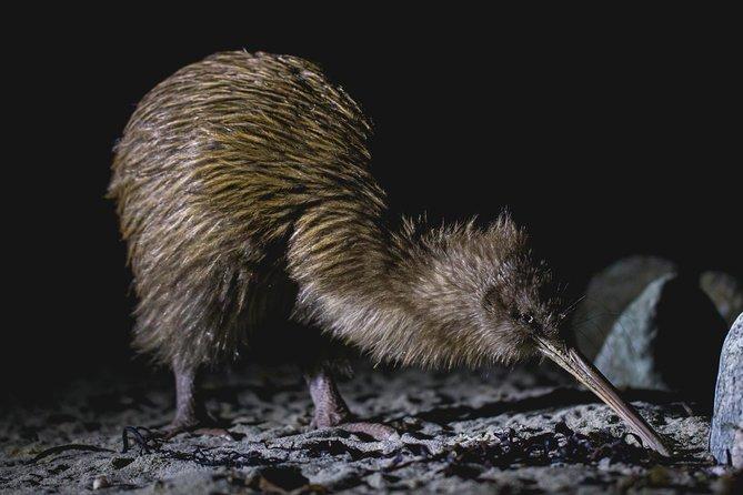 Stewart Island Wild Kiwi Encounter
