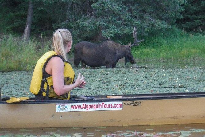 5 Day Algonquin Park Canoe Trip - Moose & Beaver Safari