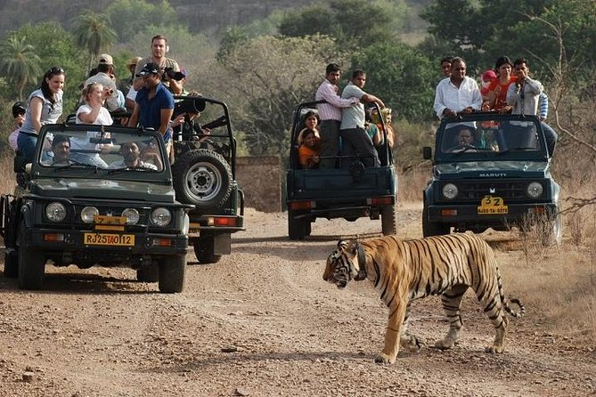 Ranthambore Wildlife Safari - Tickets & Admission Included