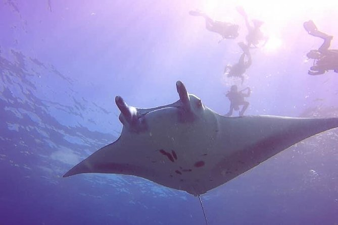 Discover Scuba Dive (No Certified Needed) Trip from Bali to Lembongan and Penida photo 6