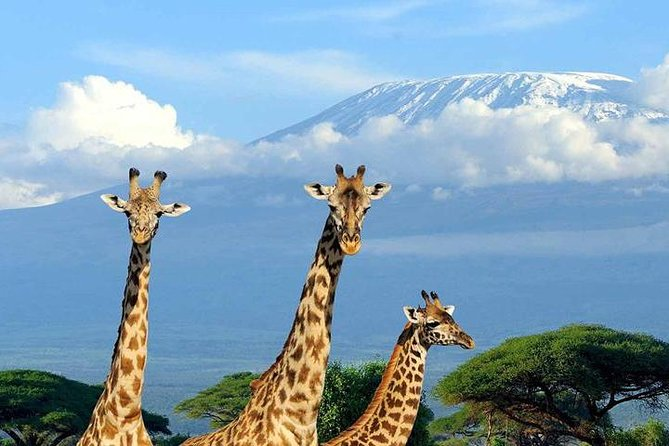 Kilimanjaro View Tours to Enduimet Wildlife Management area West Kilimanjaro