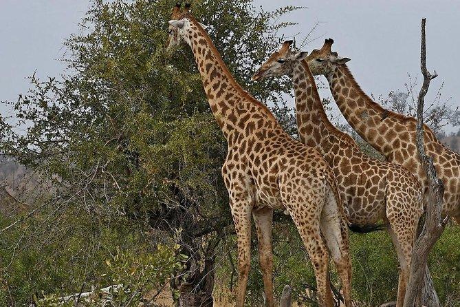 Kruger National Park - 2 Days Kruger huts accommodation