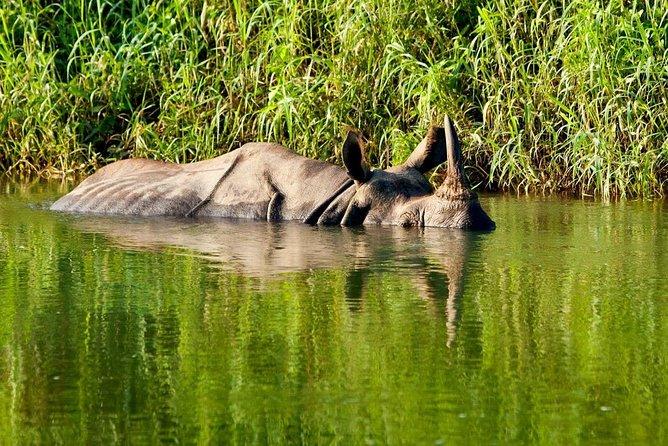 3 Nights Chitwan Jungle Safari Tour from Kathmandu or Pokhara