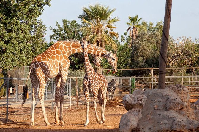 Skip the Line: Paphos Zoo (Tickets Only)