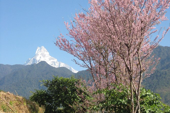 Private Multi Day Nepal Poon Hill Trekking Tour