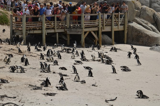 Penguins At Boulders Beach, Simonstown from Cape Town