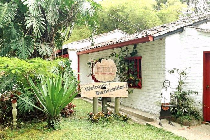 Coffee Farm Hacienda Coloma • Premium Private Tour • Keep Safe from Covid