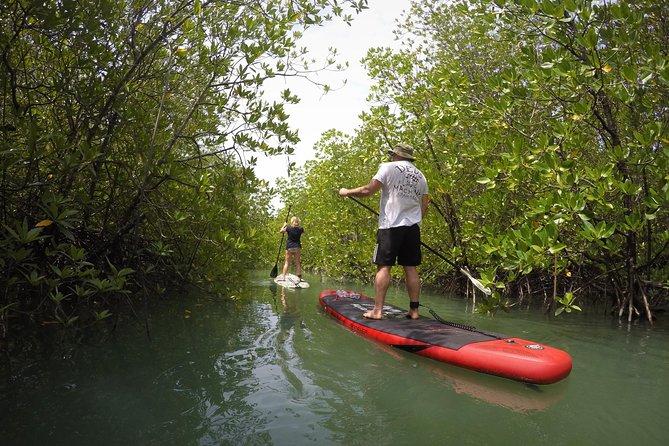 Mangroves SUP Tour Phuket