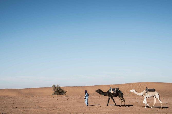Majestic Morocco Private 14 Day Tour