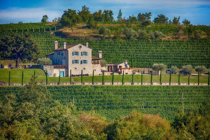 De Pula, Rovinj, Porec: Premium Wine Tasting Experience