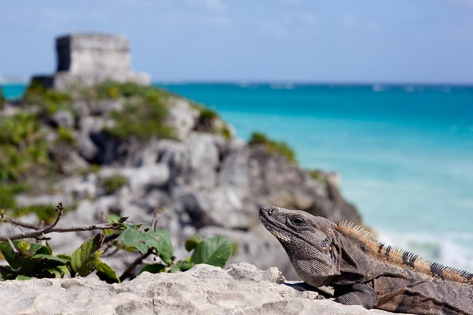 Private tour to Tulum and Coba