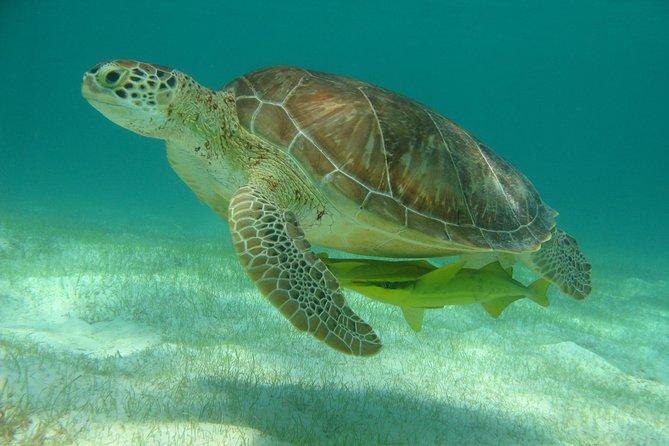 Sea turtle, 4 cenotes, Zip-Lining, cliff jumping, snorkeling, Mayan village.