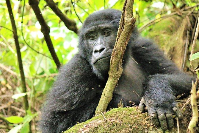 Bwindi Gorilla Trekking - Uganda