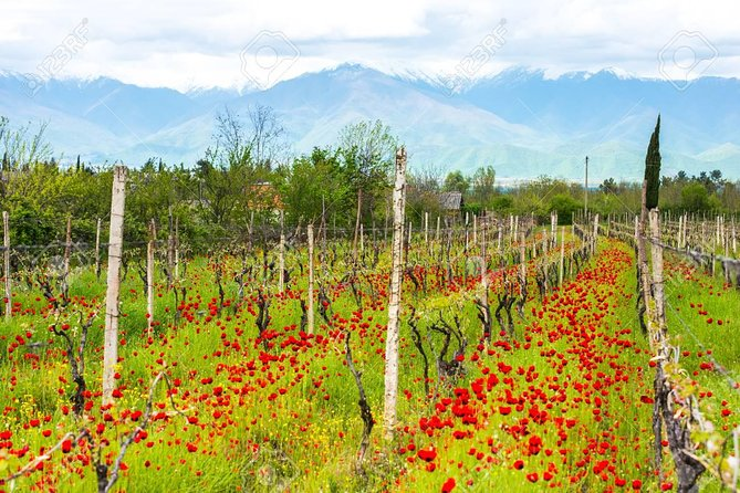 Day Trip to Garedja Caves, Sighnaghi Visit With Organic Wine tasting and lunch