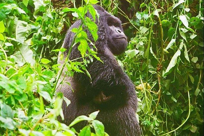 4 Days Congo Eastern Lowland Gorilla trekking and Tshibati Waterfall exploration