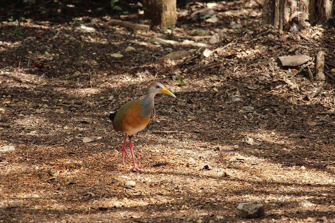 Birds of Mayan Paradise at Solferino Park