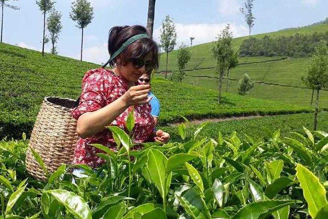 Tea Trail Walking Tour in Munnar