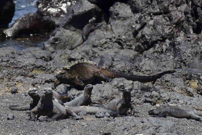 5 Days Galapagos Tour: Santa Cruz and Isabela Islands