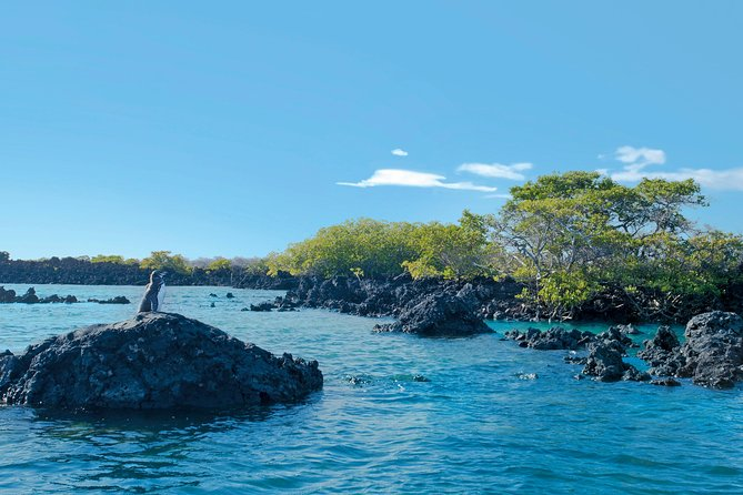 5 Days Galapagos Tour: Santa Cruz and Isabela Islands photo 8