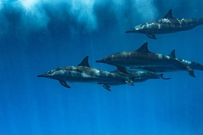 Swimming with dolphins and banana boat photo 4