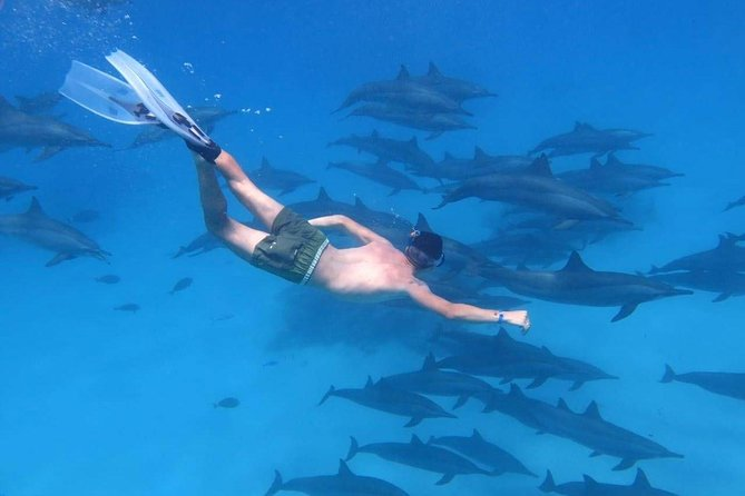 Swimming with dolphins and banana boat photo 7