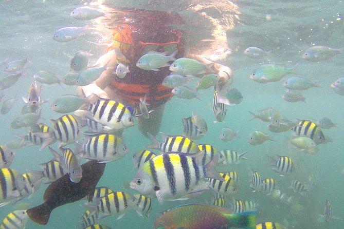 Gili Nanggu, Gili Tangkong, & Gili Kedis Snorkeling Trip