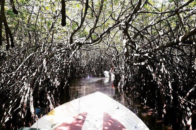 Scenic Madu River Boat Safari from Colombo