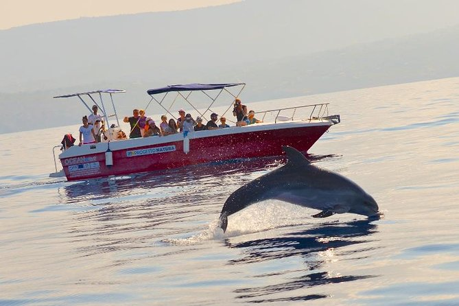 Summer Tour: Dolphin Watching and Guided Snorkeling