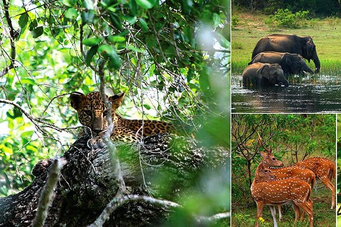 Yala Safari Day Trip from Kalutara and Surroundings - All Inclusive Package photo 1
