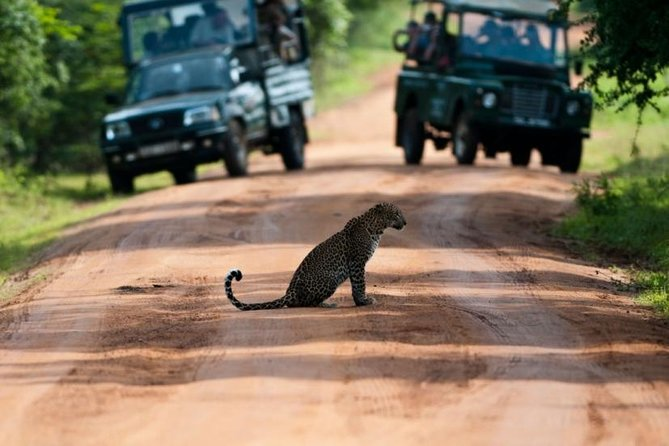 Yala Safari Day Trip from Kalutara and Surroundings - All Inclusive Package photo 3