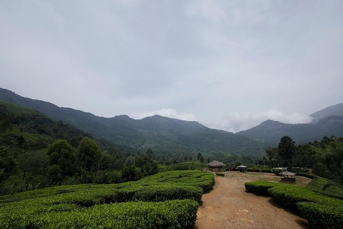 Cochin to Munnar (3 Days) photo 2