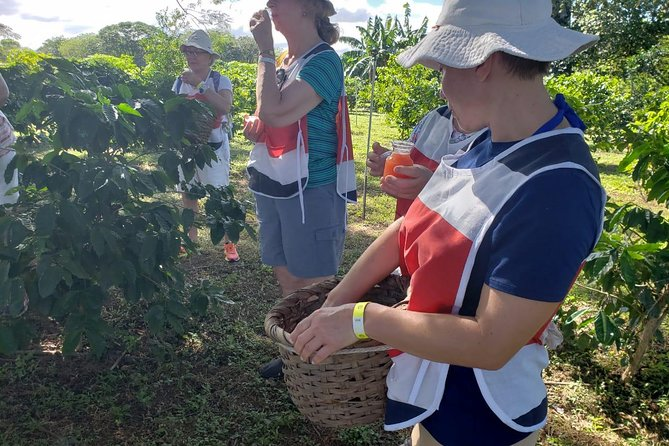 Llanos del Cortez Waterfall and Coffee Tour from Guanacaste