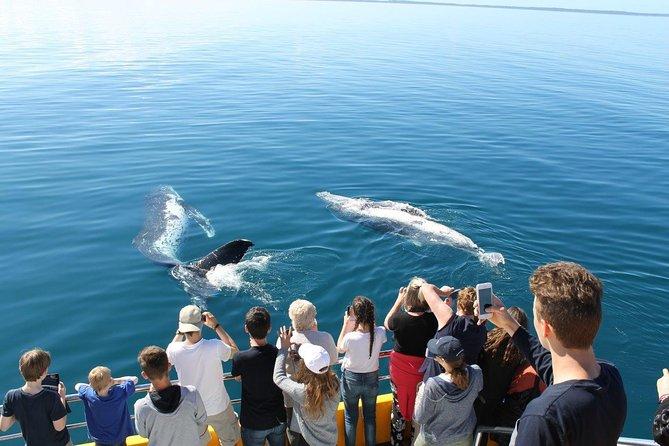 Spirit of Hervey Bay Whale Watching Cruise