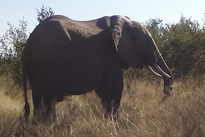 3 Day Kruger National Park from Johannesburg Round Trip