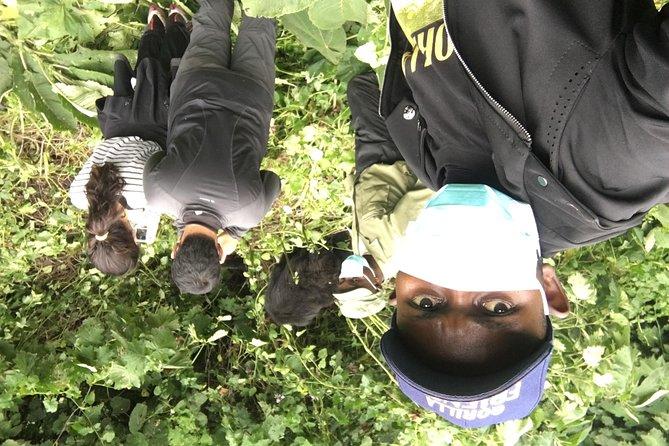 6 days Congo Eastern Lowland and Nyiragongo Volcano Hiking