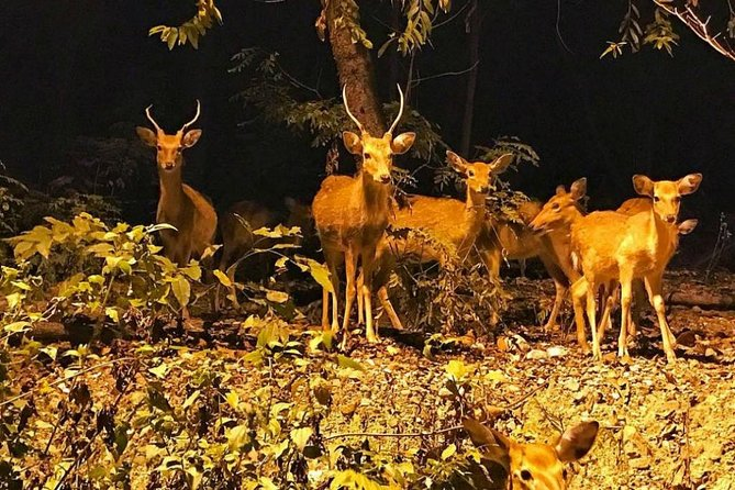 Chiang Mai Night Safari Tour with Round-Trip Transfer photo 2