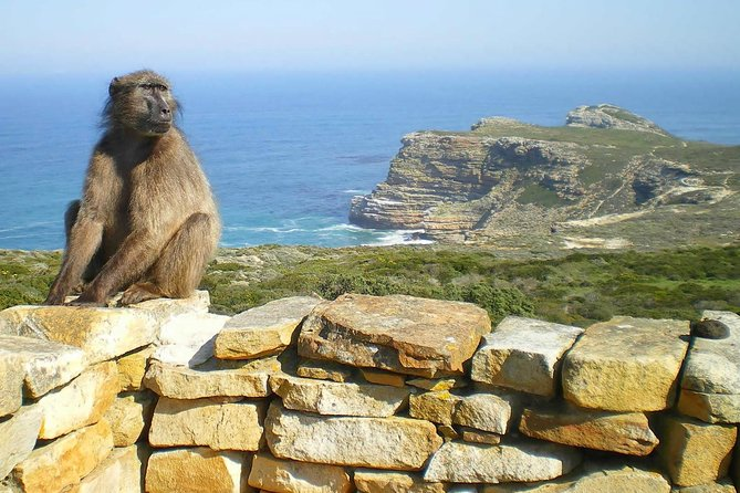 Cape Point & Penguins Small Group Day Tour from Cape Town