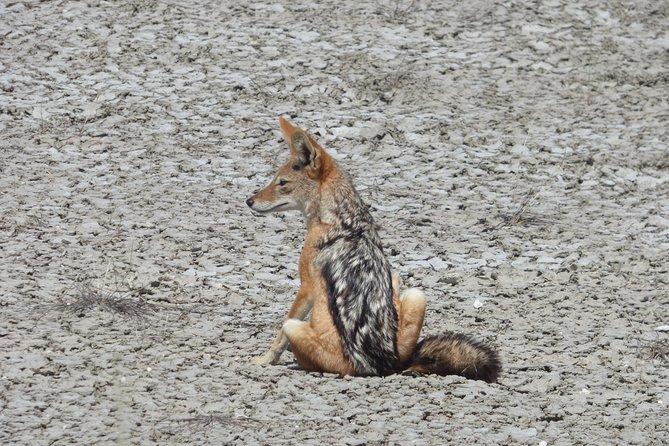 Etosha National Park 3 Day Tour - Camping
