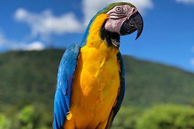 Official Ticket Zoo of the Birds - Poços de Caldas
