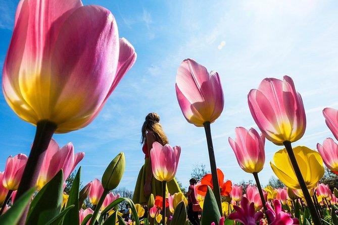 Keukenhof Gardens & Bulb Farm's visit Tour from Amsterdam & Free 1h Canal Cruise